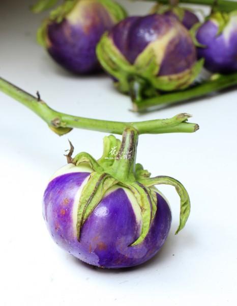 【紫光茄】