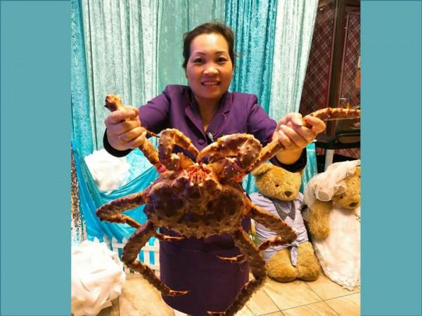重達1.8kg的活帝王蟹涮涮鍋,只要$6888