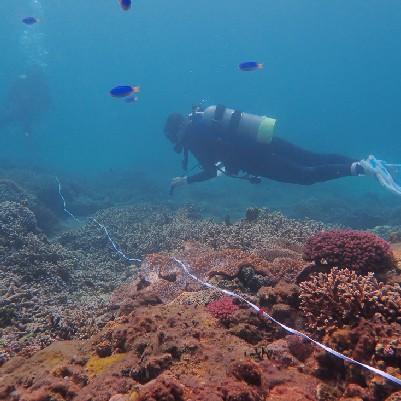2020 澎湖馬公珊瑚礁體檢成果報告